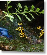 Dart Frogs On The Move Metal Print