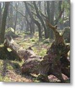 Dartmoor Woods Metal Print
