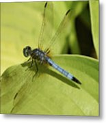Dasher In My Pond Metal Print
