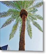 Date Palm In The City Metal Print