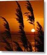 Dawn Grasses Metal Print