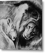 Dawn's A Coming Open Your Eyes - Lions Metal Print