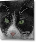 Day Dreaming Metal Print