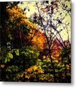 Day In The Woods  Metal Print