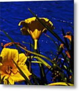 Day Lilies By The Water Metal Print