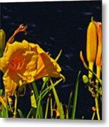 Day Lilies, Dark, Background Metal Print