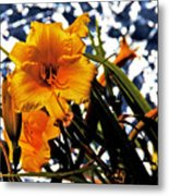 Day Lilies In  Space Metal Print