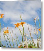 Day Lilies Look To The Sky Metal Print