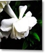 Day Lillie  Metal Print