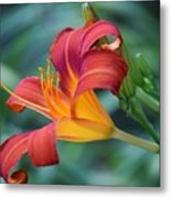 Day Lilly  Metal Print