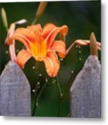 Day Lilly Fenced In Metal Print