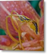 Day Lilly Stamens 1a Metal Print