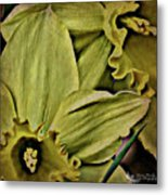 Day Lily In Yellow Metal Print