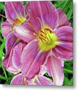 Day Lilys Metal Print