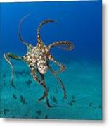 Day Octopus Metal Print