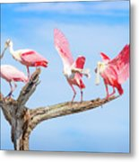 Day Of The Spoonbill  Metal Print