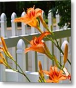Daylilies On Picket Fence Metal Print