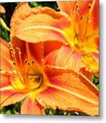 Daylillies In Bloom Metal Print