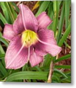 Daylilly Metal Print