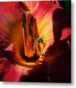 Daylily Collection # 19 Metal Print