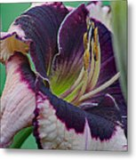 Daylily Collection #12 Metal Print