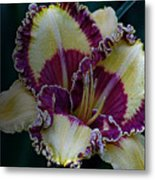 Daylily Collection #9 Metal Print