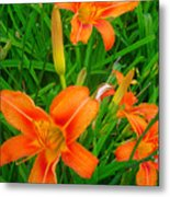 Daylily Greeting Metal Print by Guy Ricketts