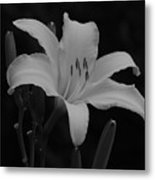 Daylily In Black And White Metal Print