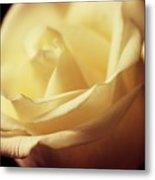 Days Of Creamy Rose Metal Print