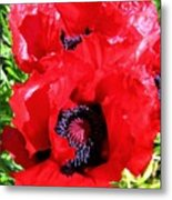 Dazzling Red Poppies Metal Print