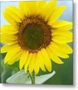 Dazzling Sunflower Metal Print