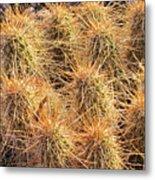 Dbg Cactus II Metal Print