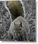 Dc Squirrel Metal Print