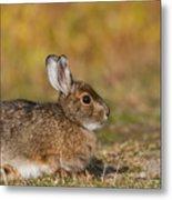 Ddp Djd Snowshoe Hare 98 Metal Print