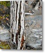 Dead Tree Above Tree Line I Metal Print