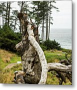 Dead Tree At Ecola Park Metal Print