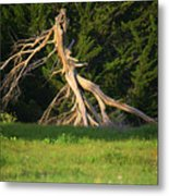 Dead Tree II Metal Print