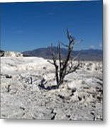 Dead Tree In Yellowstone Park Hot Springs  Metal Print