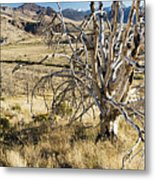 Dead Tree Panorama Metal Print