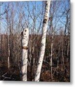 Dead Tree Metal Print by Richard Mitchell
