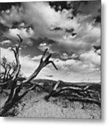 Dead Trees at Mesquite Dunes Metal Print