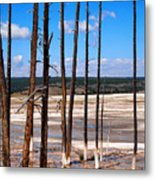 Dead Trees Standing In Hot Springs Within Yellowstone National P Metal Print