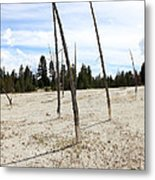 Dead Trees, Yellowstone Metal Print