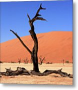 Dead Vlei Tree  Metal Print by Aidan Moran