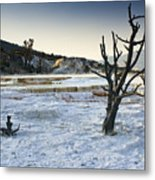 Dead Wood Springs Metal Print