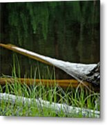 Deadwood And Pine Reflections Metal Print