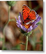 Death Valley Butterfly Metal Print