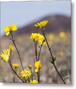 Death Valley Super Bloom 2016 Metal Print