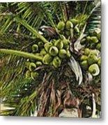 Debbie's Coconuts Metal Print