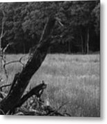 Debris Black And White Metal Print